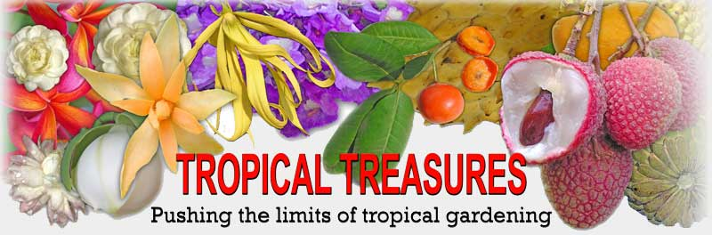 Tropical Treasures Magazine